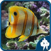 海洋鱼类拼图 1.3