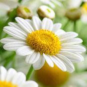 惊人的花卉园壁纸背景:免费Spring版