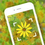 园艺花卉植物识别鉴定