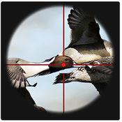 打鸟达人: 鸟射...