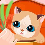 照顾可爱小猫咪,...