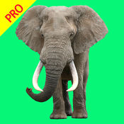 动物叫声专业版 - 大自然的声音老虎音效少儿教育 1.1