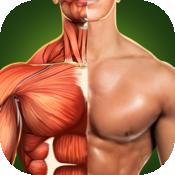 人体解剖学3D - 骨骼和肌肉 Pro 5