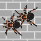 巨大的变异蜘蛛