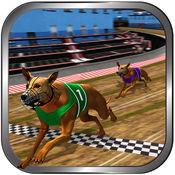 疯狂的真正的狗赛跑 1