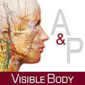 解剖和生理学 4.1.11
