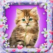 漂亮的小猫壁纸