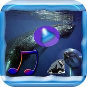 轻松的音乐鲸