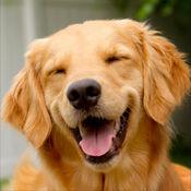 狗的声音:有趣的声音的爱狗人士,孩子和成人 1.1
