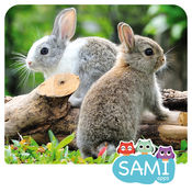 Sami Tiny  FlashCards 动物 6 languages kids apps 1.01