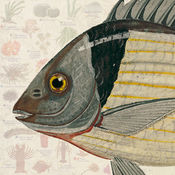 海洋物种 (Marine Species) 1.1