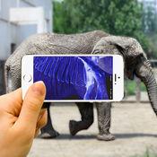 动物扫描仪-宠物X光