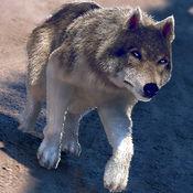 狼 动物 模拟 赛跑 游戏 的 免费 三维 1.0.0