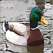 水禽狩猎 -鸭,你的手机通话