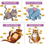 小学儿童英语动物词汇: 免费游戏 1