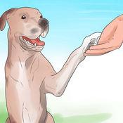 小狗训练知识百科-自学指南、视频教程和技巧