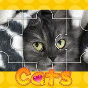 猫的照片拼图_猫拼图