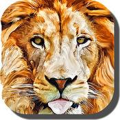 狮子壁纸 - 有趣的真棒动物背景
