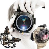 有趣的动物照片炸弹 - 让你的自拍照真棒可爱的贴纸
