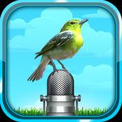 自然,轻松的鸟的声音。掌上鸟。