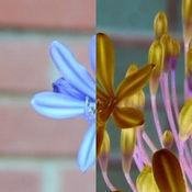 胶片之家 - 一键胶片效果渲染