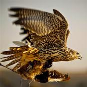 猎鹰知识百科:自学指南、视频教程和技巧 1