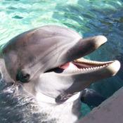 海豚声 7.1.1