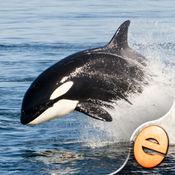 逆戟鲸拼图儿童拼图免费版奇迹