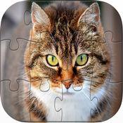 可爱 小猫 猫 拼...