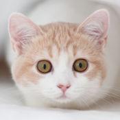 猫叫模拟器: 猫叫声 + 狗叫声