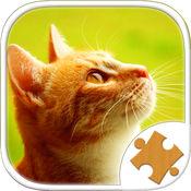 可爱的猫咪 可爱的小猫 猫的游戏 好玩的益智小游戏 Cat Kitten Puzzle Jigsaw