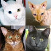 猫品种 : 关于所有受欢迎的品种的猫问答