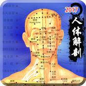 3d人体解剖生理学-人体医学肌肉解剖图谱