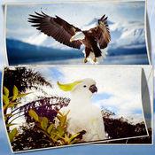 所有的鸟类壁纸...