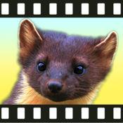 为年幼儿童和刚学步儿童准备的动物视频应用 1.5