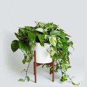 室内植物种植指南知识百科-自学指南、视频教程和技巧2 1