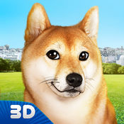 玩你的狗:芝犬 1