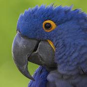 鹰眼修图 专业版 - 一键照片锐化