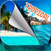 热带岛屿壁纸 – 美丽的夏日海滩和棕榈树图片 1