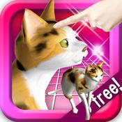 抚摸玳瑁(三毛)猫!小猫的叫声超可爱,随时可以玩的免费宠物猫