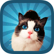 可爱的小猫猫照片贴纸编辑器 1.1