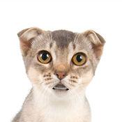会说话的猫 2...