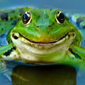 会说话的青蛙...