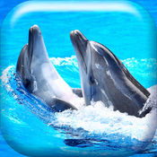 海豚 墙纸 HD 采集  1