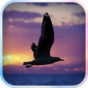 滤镜相机 - Flying Bird 2.4