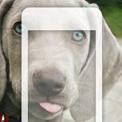 99 Wallpaper.s 狗的背景和小狗为您的手机 1