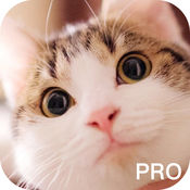 逗猫必备神器专业版-宠物交流模拟器