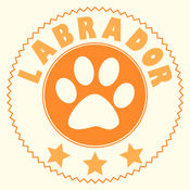 拉布拉多-狗狗训...