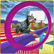 真正的狗特技&跳德比3D 1