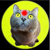 红点 为了猫 玩笑 1